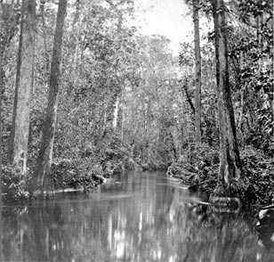 A remote scene on the Ocklahawa River circa 1880